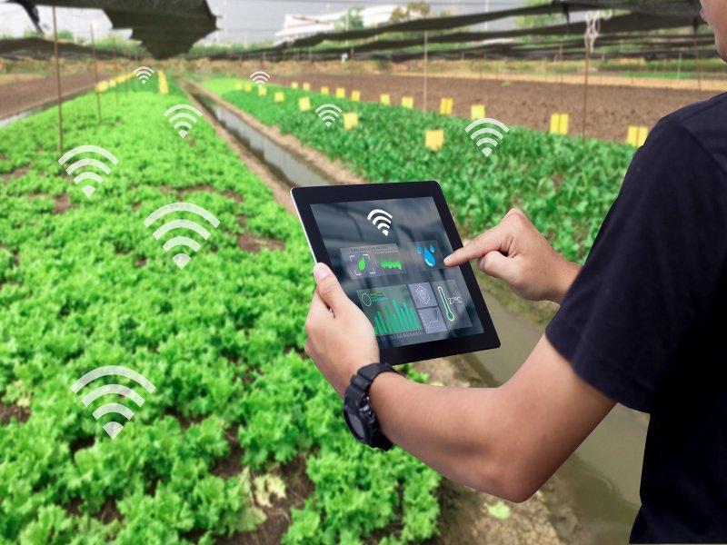 台灣之星續佈局智慧農業 再攜皇鋒通訊、和潤企業、天龍安全科技投入農村創生計畫。(廠商提供)